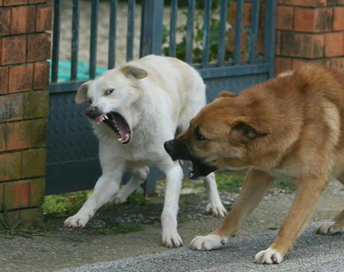 Incidente per un branco di cani, chiesti 176mila euro al comune di Agrigento