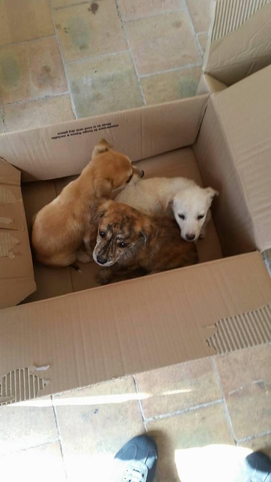 Cuccioli abbandonati a Favara Ovest interviene l'U.D.A. Di Agrigento