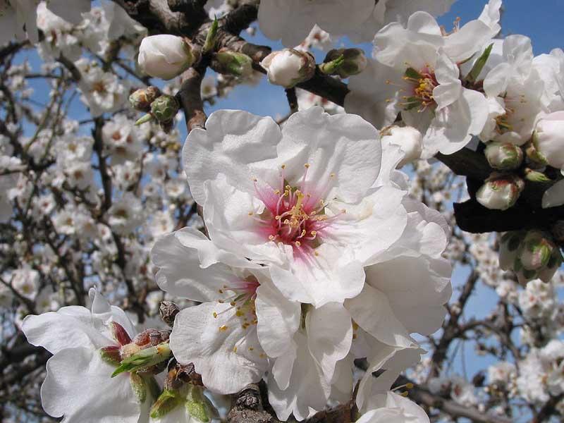 Il Mandorlo in fiore di Agrigento sbarca a Palermo per l'anteprima della 67^ edizione